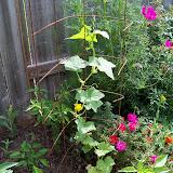 Gardening 2010, Part Three - 101_3715.JPG