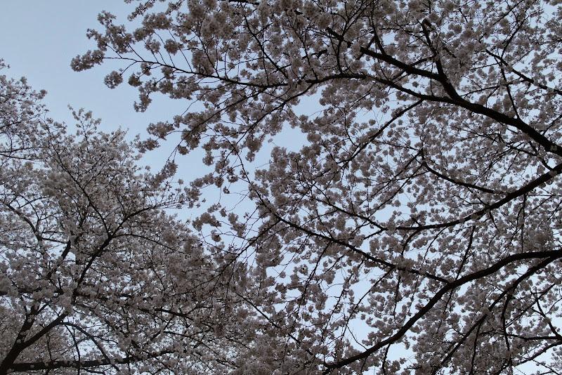 2014 Japan - Dag 1 - janita-SAM_5619.JPG