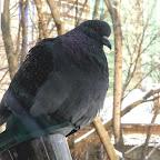 Кормушки для птичек 094.jpg
