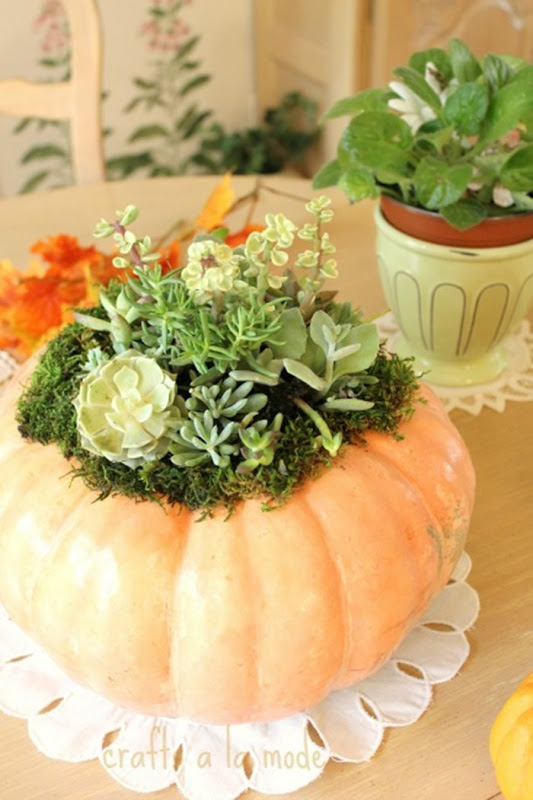 succulent pumpkin table2
