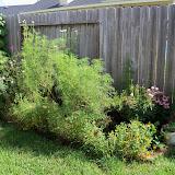 Gardening 2010, Part Three - 101_4989.JPG