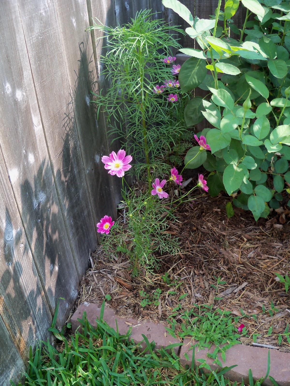 Gardening 2010, Part Two - 101_3095.JPG