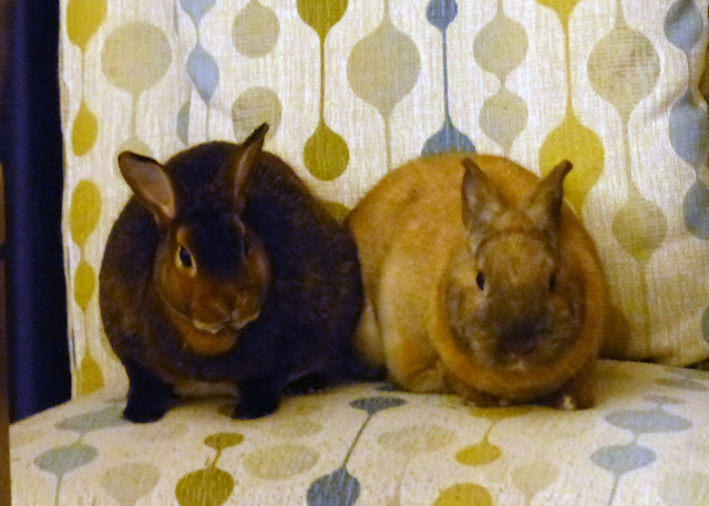 Hershey & Butterscotch Bunnies