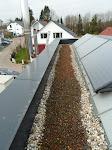 Sieht so eine Dachbepflanzung aus???