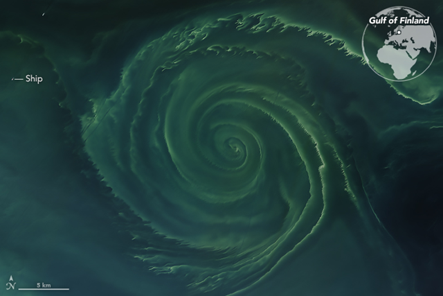 On 18 July 2018, the Operational Land Imager (OLI) on Landsat 8 acquired a natural-color image of a swirling green phytoplankton bloom in the Gulf of Finland, a section of the Baltic Sea. Note how the phytoplankton trace the edges of a vortex; it is possible that this ocean eddy is pumping up nutrients from the depths. Photo: Joshua Stevens and Lauren Dauphin / NASA Earth Observatory