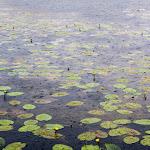 20150613_Fishing_Virlia_021.jpg