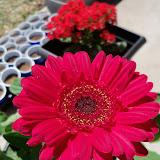 Gardening 2010 - 101_0581.JPG