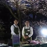 20160404農水省「観桜会」満開の桜.jpg