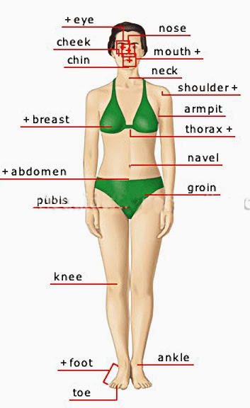 HUMAN BODY WOMAN ANTERIOR VIEW