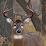 Echo Viper's profile photo