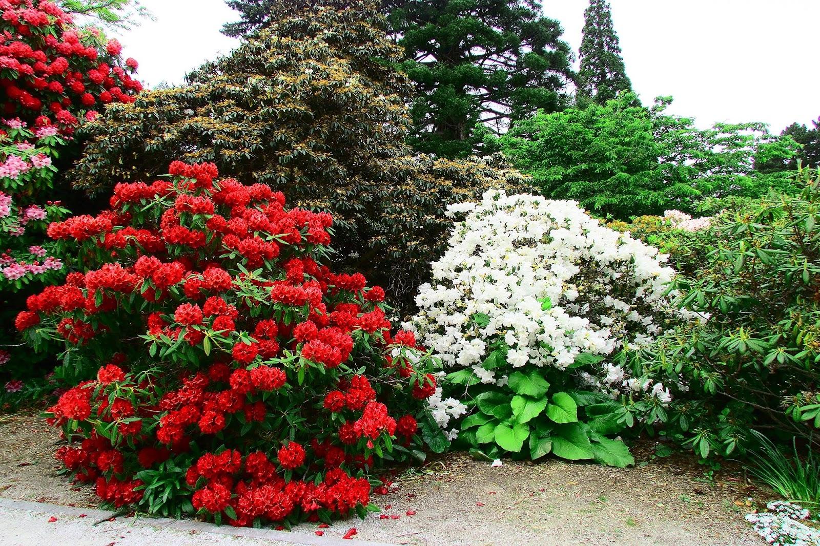 Queenstown Botanic Gardens Flowers.jpg