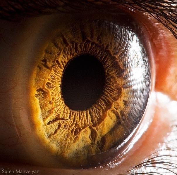 human eyes 1 (1)