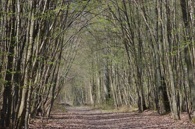 Les Hautes-Lisières (Rouvres, 28), 27 mars 2012. Photo : J.-M. Gayman
