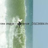 _DSC9684.thumb.jpg