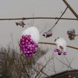 Winterkiekjes Servicetv - Ingezonden%2Bwinterfoto%2527s%2B2011-2012_31.jpg