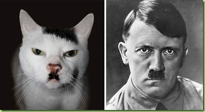 celebrity-look-alikes-animals-3.hitler cat jpg