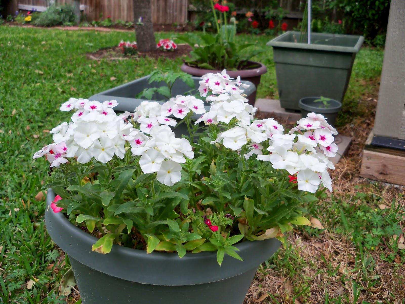 Gardening 2014 - 116_1249.JPG