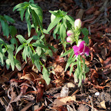 Gardening 2010, Part Two - 101_2981.JPG