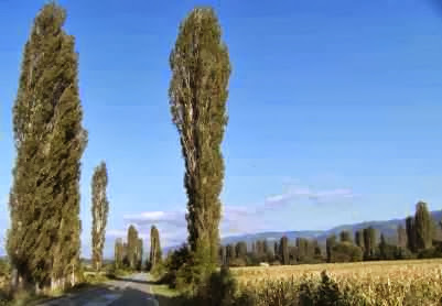 Pappel-Allee im Tal von Kriva Palanka