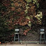Fall in MI, 09 (108 of 122)dng.jpg