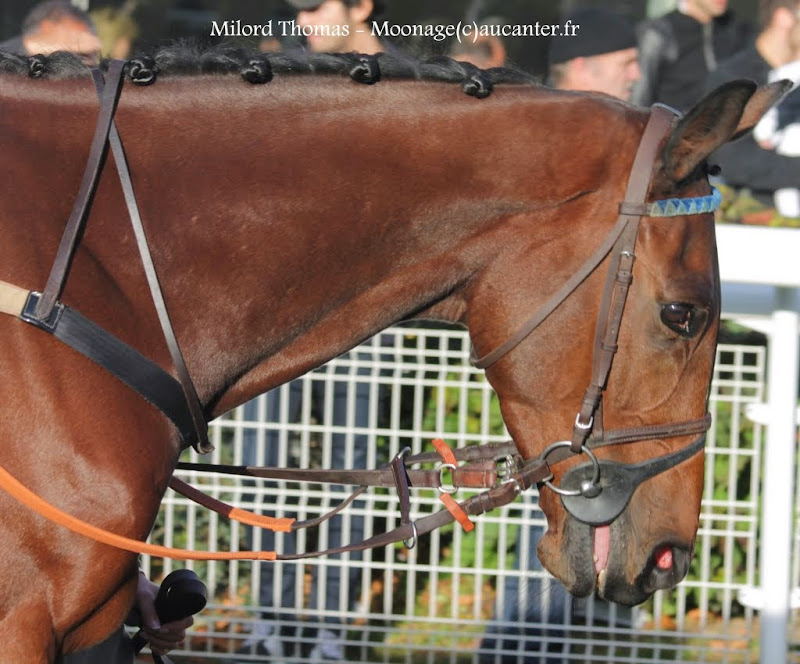 Photos Auteuil 2-11-2014 (48h de l'obstacle) IMG_5581