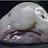 meg harnett avatar image