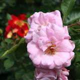 Gardening 2012 - IMG_3756.JPG