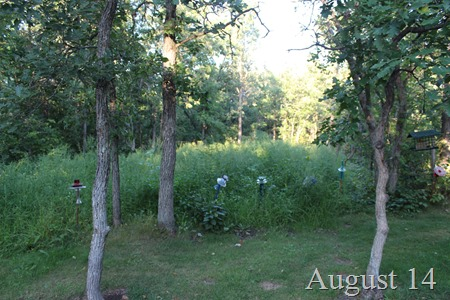 August 14 wild garden