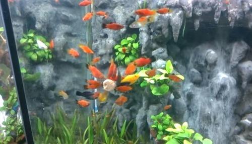 fish-tank-(10)