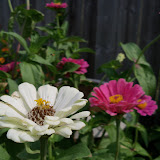 Gardening 2011 - 100_8649.JPG