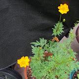 Gardening 2012 - 115_1964.JPG