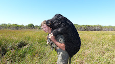 Lucas Tilgaard carrying a 85kg wild boar on his back at Carmor Plains. The NZ hunters carry them like this. In Australia we just use the Landcruiser!