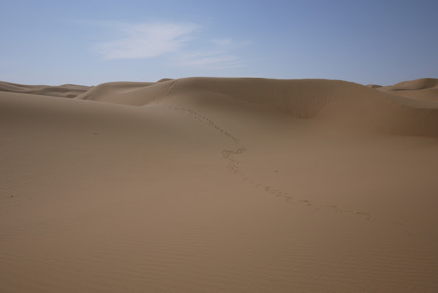 footprints in the desert at Shapotou in Ningxia