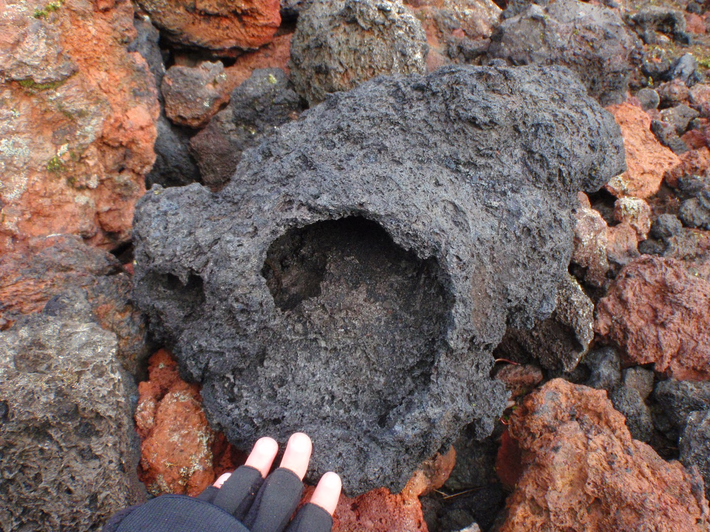 Large cavity in scoria boulder collected from the bottom of a scoria cone. Undetermined locality near Landmannalaugar, southern Iceland.