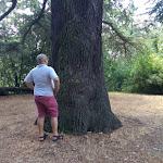 Kainua citta etrusca un albero che conosce la storia.jpg