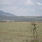 Kenya011.JPG