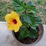 Gardening 2010 - 101_0898.JPG