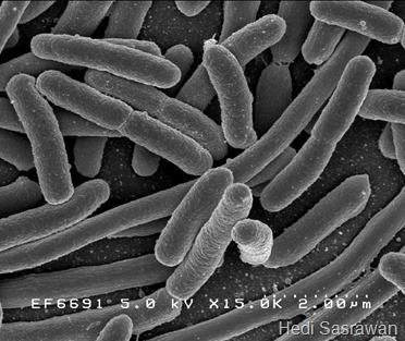 Peranan Bakteri dalam Kehidupan yang Menguntungkan dan Merugikan