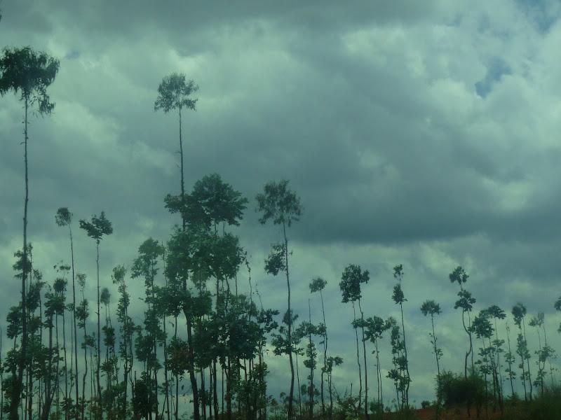 quels sont ces arbres?