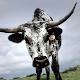 Bob Denny's profile photo