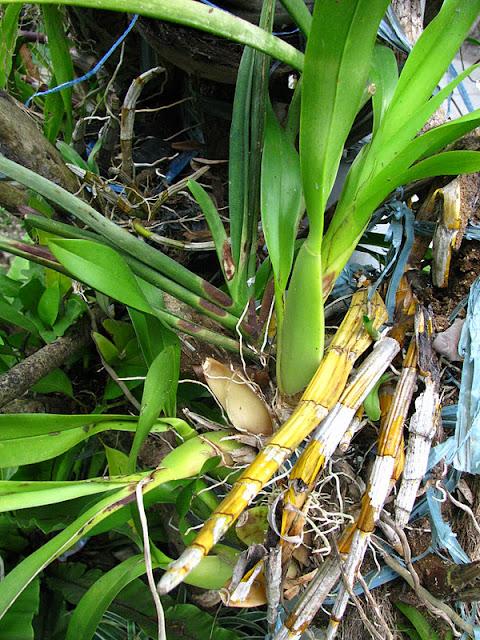 Из зимы в лето. Филиппины 2011 - Страница 4 IMG_0005%252520%2525283%252529