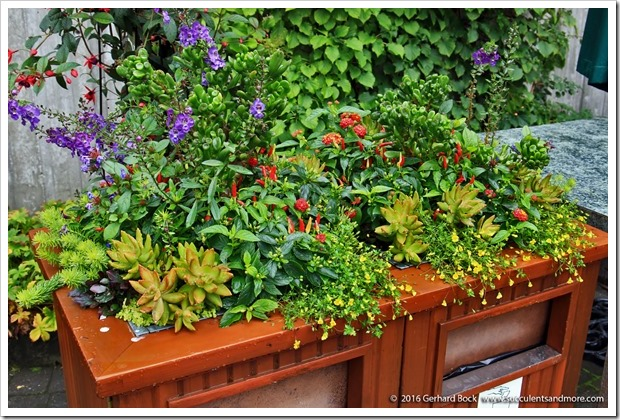 160906_Butchart_Gardens_0080