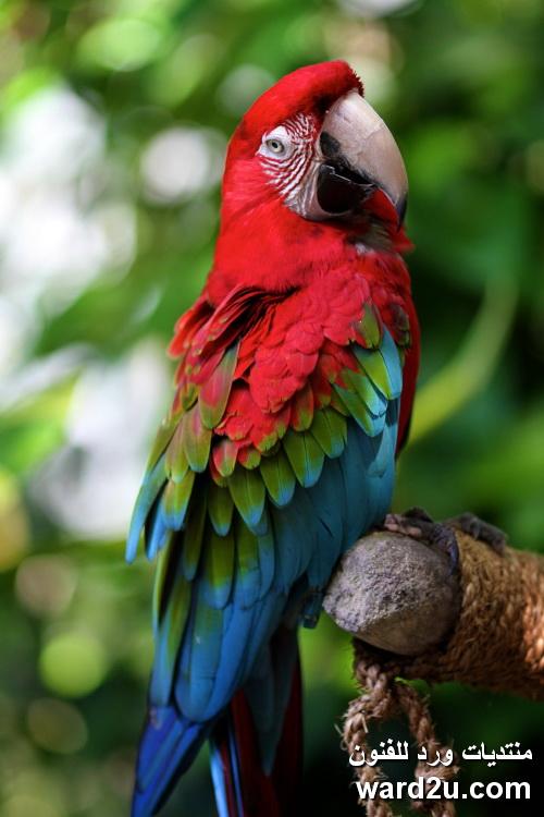 صور لاجمل الطيور فى العالم