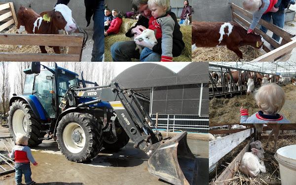 Boeren Lentefeesten Albert Heijn Mamablog Mamablogger Uitje Uitstapje Gratis Pasen Tweede Paasdag Koeien Lammetjes Melkvee Boerderij