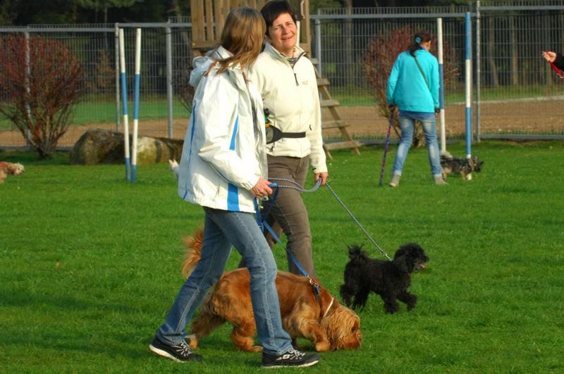 Kleinhundegruppe Mittwoch 17.30 Uhr - DSC_0046.jpg