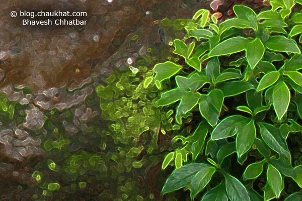 A crop of the leaves beside a beautiful waterstream amongst countless flowing in the valleys of Tamhini Ghat in the Western Ghats