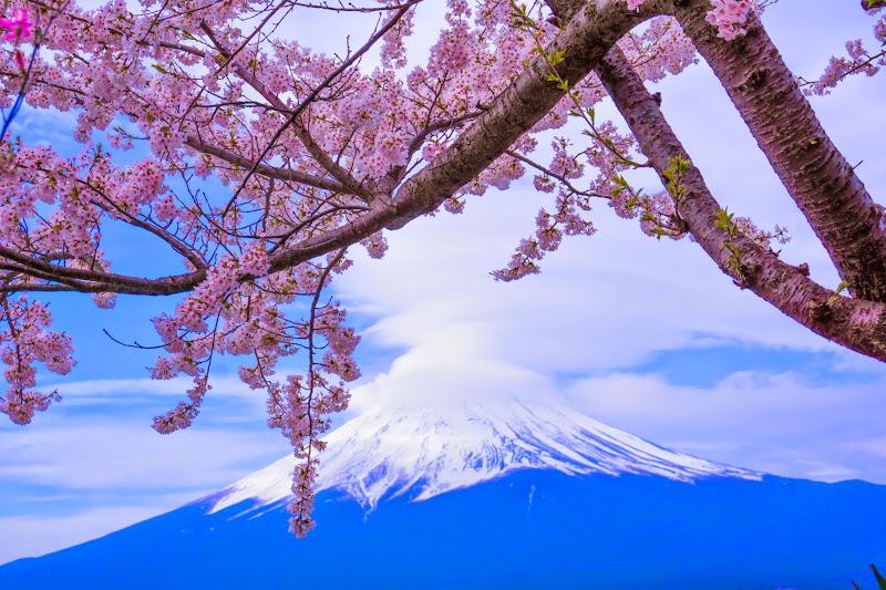 Lake kawaguchiko, cherry blossoms, Mt Fuji, Ubuyagasaki 8