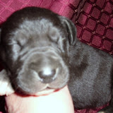 available black female @ 10 days