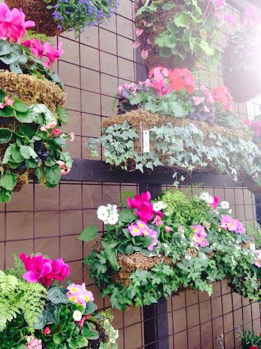 Hanging floral baskets, Rogers gardens Newport Beach