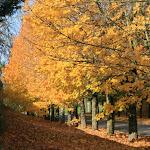 Avenue de la Vieille France : automne